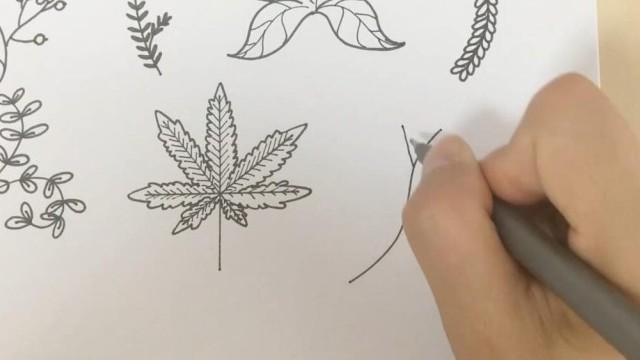 亲子绘画 桃子部落简笔画之叶子物语